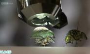 【原创文章】BBC纪录片分享:昆虫解剖(Insect Dissection: How Insects Work)