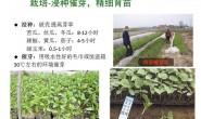 一次完整的蔬菜种子浸种催芽试验记录