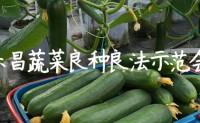 【原创文章】2018乐昌蔬菜良种良法示范会,百蔬君帮做技术支撑