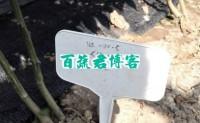 长福8号辣椒-一个让人影响非常深刻的新型进口辣椒品种