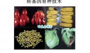 转基因育种技术:从目的基因分离到转基因植物新品种的获得