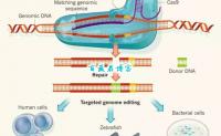 科学前沿:我们已经跨入大众改造转基因生物时代