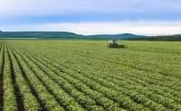 粮食作物病虫害之大豆虫害识别与防治