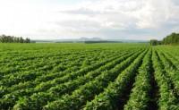 粮食作物病虫害之大豆病害识别与防治