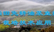 广东油菜免耕直播栽培技术