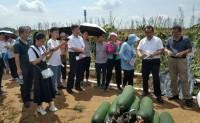 【原创文章】广东农科院助力三水冬瓜产业发展